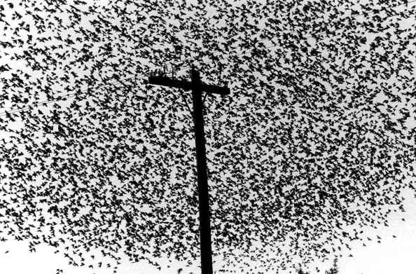 5422ff513a119graciela-iturbide-pájaros-en-el-poste-de-luz-birds-on-cross-like-telephone-pole-carretera-a-guanajuato-mexico-1990-image-courtesy-of-the-artist-and-rosegallery-santa-monica-ca.